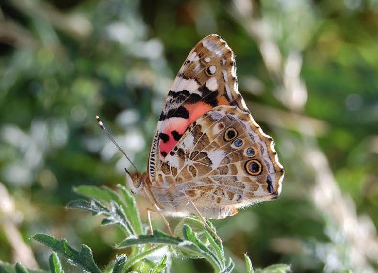 Exposition biodiversité : plantes et papillons de chez nous